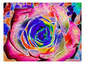 Rainbow-Colored Rose by Rich LaPenna