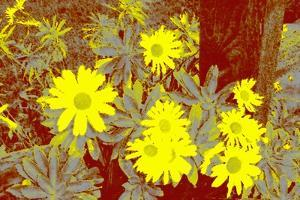 Yellow Daisies by Rich LaPenna