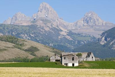Abandoned Farmhouses and Wheat Fields in Front of the Teton Range by Rich Reid
