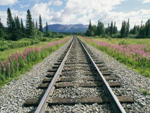 Alaska Railroad Tracks Lined on Either Side by Pink Fireweed by Rich Reid