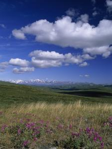 Alaska Range, Tundra Grass and Cumulus Clouds from the Denali Highway by Rich Reid