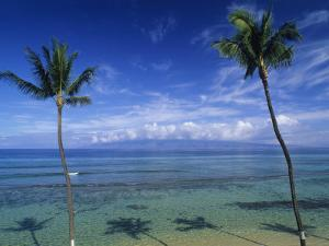 Palm Tree Shadows at Kaanapali Beach and Molakai Island in Distance by Rich Reid