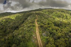 Aerial over Ohia Forest Canopy, Kamakou Preserve of Nature Conservancy, Molokai, Hawaii by Richard A Cooke III