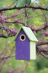 Bird House Nest Box in Eastern Redbud Tree in Spring, Marion, Il by Richard and Susan Day