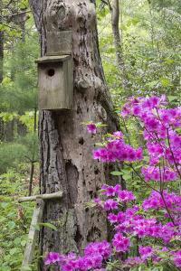 Birdhouse and Azaleas, Azalea Path Arboretum and Botanical Gardens, Hazleton, Indiana by Richard and Susan Day