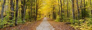 Fall Color Hiawatha National Forest Road Alger County in the Upper Peninsula, Michigan by Richard and Susan Day