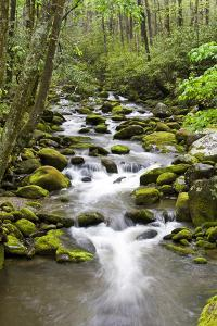 Great Smoky Mountains National Park, Tennessee by Richard and Susan Day