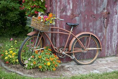 Old Bicycle with Flower Basket Next to Old Outhouse Garden Shed. Marion County, Illinois