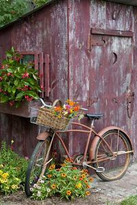 Old Bicycle with Flower Basket Next to Old Outhouse Garden Shed by Richard and Susan Day