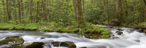 Panoramic of Straight Fork Creek in Spring, Great Smoky Mountains National Park, North Carolin by Richard and Susan Day