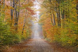 Road in Fall Color Schoolcraft County, Upper Peninsula, Michigan by Richard and Susan Day