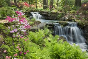 Waterfall with Ferns and Azaleas at Azalea Path Arboretum and Botanical Gardens, Hazleton, Indiana by Richard and Susan Day