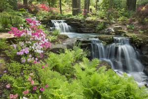 Waterfall with Ferns and Azaleas at Azalea Path Arboretum and Botanical Gardens, Hazleton, Indiana by Richard and Susan Day