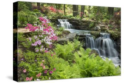 Waterfall with Ferns and Azaleas at Azalea Path Arboretum and Botanical Gardens, Hazleton, Indiana