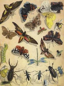 Insects by Richard Andre