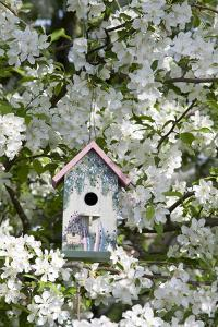 Nest Box in Blooming Sugartyme Crabapple Tree, Marion, Illinois, Usa by Richard ans Susan Day