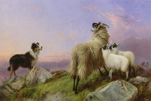 Collie, Ewe and Lambs by Richard Ansdell
