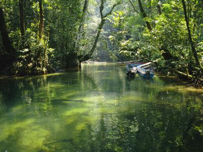 Longboats Moored in Creek Amid Rain Forest, Island of Borneo, Malaysia