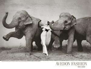 Dovima with Elephants, c.1955 by Richard Avedon