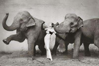 Dovima with Elephants, c.1955 by Richard Avedon