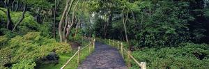Tea Garden Walkway, San Francisco Botanical Gardens by Richard Berenholtz