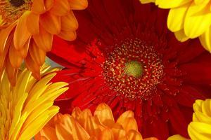 Close up of a gerberas by Richard Bryant
