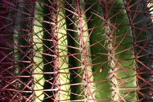 Close up of Cacti. by Richard Bryant