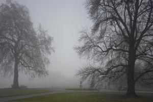 Royal Botanic Gardens, Kew, London. Palm House Obscured by Fog with Winter Trees by Richard Bryant