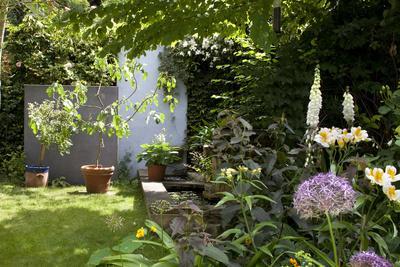 Suburban Garden Detail, Kingston Upon Thames, England, UK