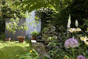 Suburban Garden Detail, Kingston Upon Thames, England, UK by Richard Bryant