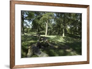 Sunlight Filtereing Through Trees in Richmond Park, Richmond, Surrey, London by Richard Bryant