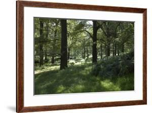 Sunlight Filtering Through Trees in Richmond Park, Richmond, Surrey, London by Richard Bryant