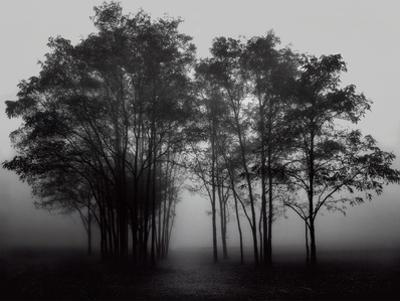Gathered Trees