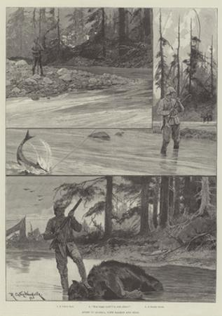 Sport in Alaska, with Salmon and Bear