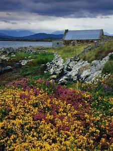 Flowers Along Carna Bay by Richard Cummins