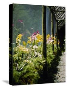 Orchids, Garden of the Sleeping Giant, Fiji by Richard Cummins