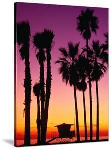 Palm Trees at Sunset, Venice Beach, Los Angeles, Los Angeles, California, USA by Richard Cummins