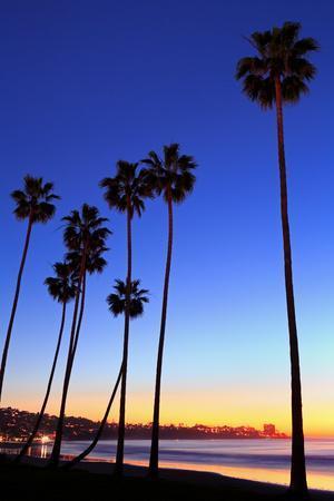 Palm trees, La Jolla Shores Beach, La Jolla, San Diego, California, United States of America, North