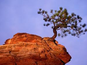 Ponderosa Pine and Hoodoo Rock by Richard Cummins