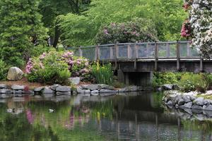 Wright Park, Tacoma, Washington State, United States of America, North America by Richard Cummins