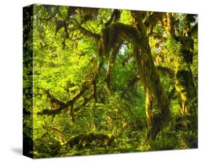 Hoh Rain Forest I