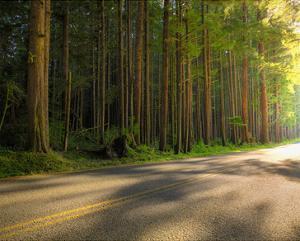 Hoh Rain Forest, Upper Hoh Road by Richard Desmarais