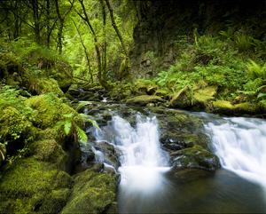 Killarney Torc Falls, Ireland by Richard Desmarais