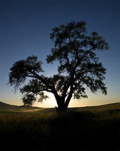 La Palouse Steptoe Tree Silhouette by Richard Desmarais