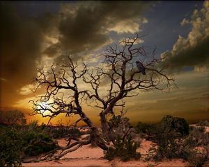 Moab Tree by Richard Desmarais