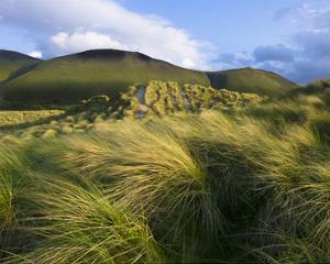Ross Behy Sand Dunes, Ireland III by Richard Desmarais