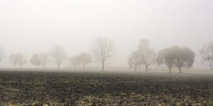 Tree Line in Fog by Richard Desmarais