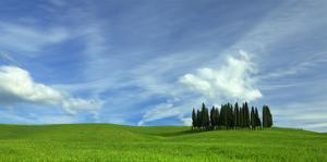 Tuscan Cyprus Cluster by Richard Desmarais