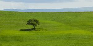 Tuscan Field by Richard Desmarais
