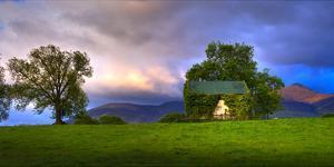 Vine Covered Cow Barn, Ireland by Richard Desmarais